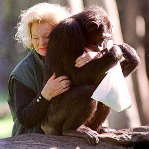 kalu-chimpanzee.jpg
